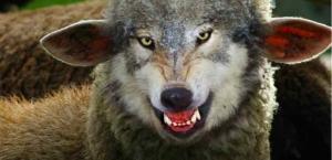 wolfImSchafspelz